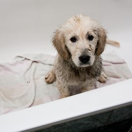 5 Tips for Keeping a Clean Home with Dogs